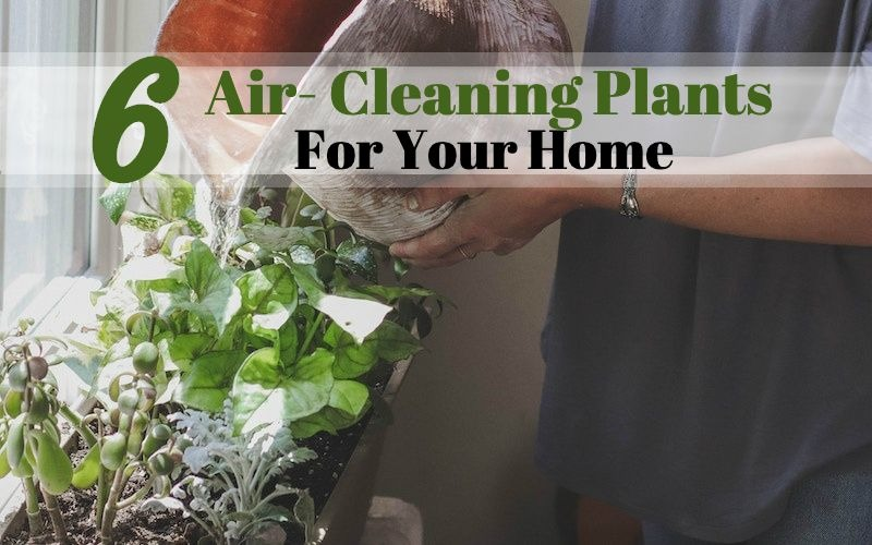 air cleaning plants for new home